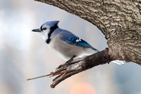 Birds of Central Park 2012-2013